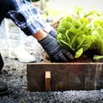 Family-Protection-Home-Gardening